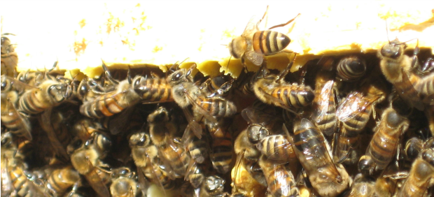 What's All That Buzzing About??? – Part Two