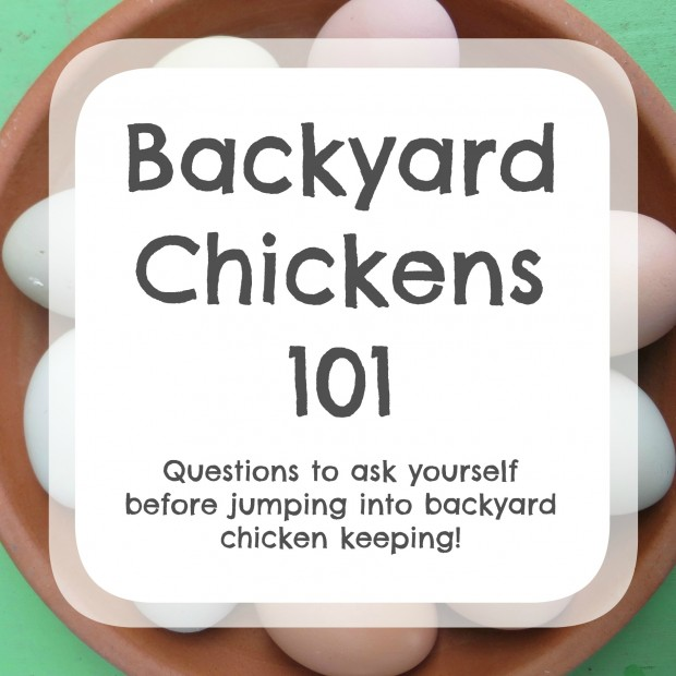 Backyard Chickens 101 - questions