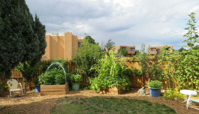 6 Tips For Desert Gardening - desert vegetable garden design