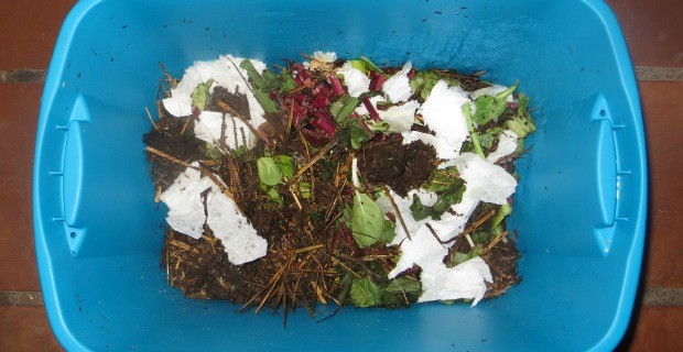 Vermicomposting & Worm Bins
