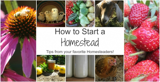 How to Start Your Homestead