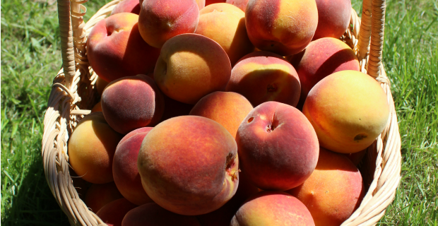 In the Kitchen – Peaches!