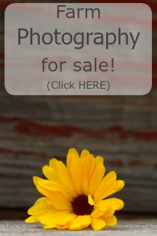 Photography-for-sale-sidebar.jpg