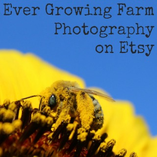 EGF-Photography-on-Etsy-Sidebar-pic.jpg