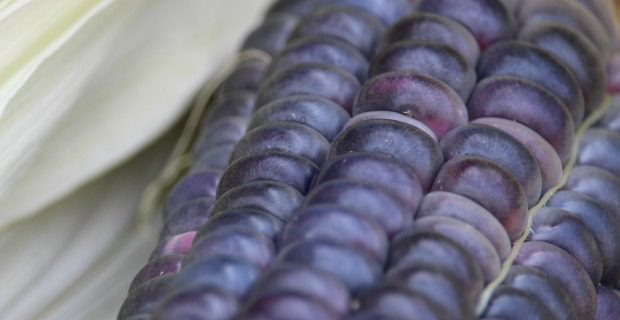 For the Love of Blue Corn